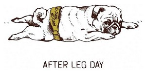 Мопс after leg day